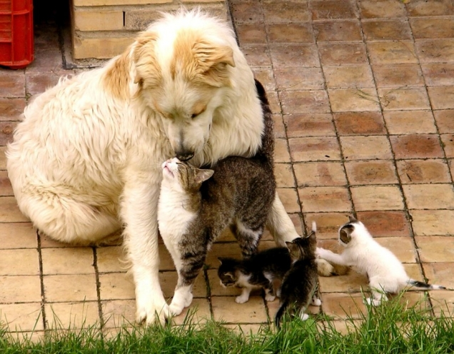 Cats bond with dog
