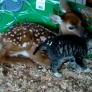 Deer and kitten are best friends