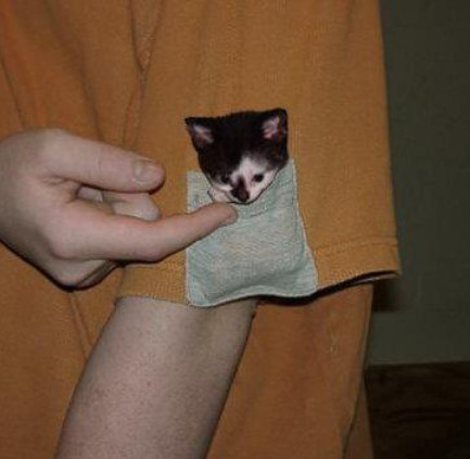 Pocket kitten