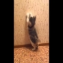 Kitten vs. wallpaper