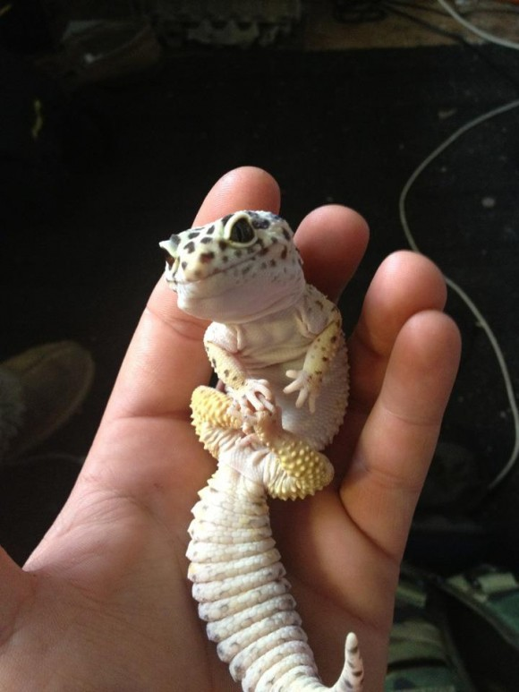 On Teh Cute you ll find the best cute animal pictures  cute puppy    Cute Lizard Drawing