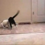 Puppy playing with cat
