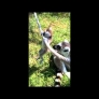 Baby lemur discovers rope