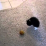 Kitten plays with tinsel ball