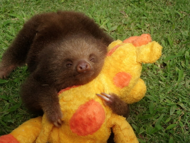 Sloth  hugs plush toy