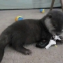 Baby otter plays with keys