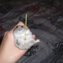 Hamster has a stick
