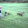 Kid is being chased by a gang of puppies
