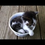 Kitten loves its cool-whip bowl