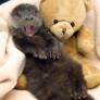 Otter is happy