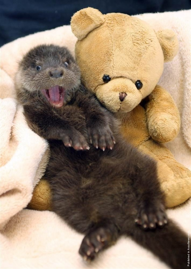 Otter is happy - Teh Cute