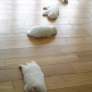 Puppies sleeping on the floor