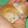 Sleeping bunny