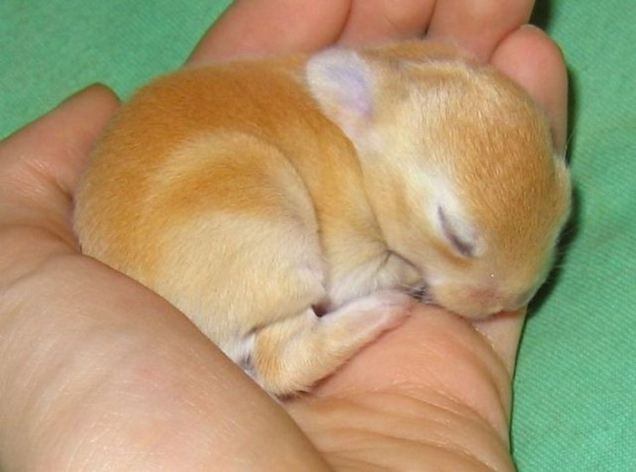 Sleeping bunny - Teh Cute