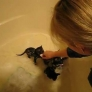 Bath time for baby kittens