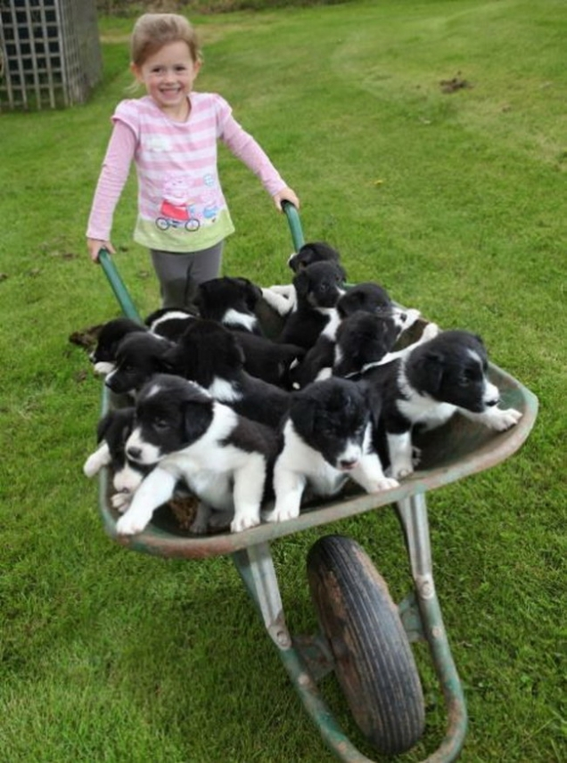 On teh cute you ll find the best cute animal pictures cute puppy