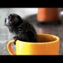 Tiny monkey in a cup