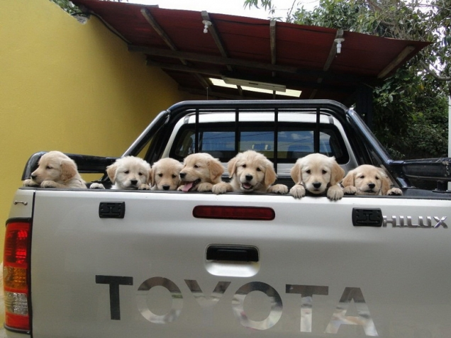 Puppies going for a ride