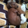 Puppy sleeping with his toy