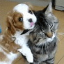 Puppy teasing cat