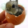 Bunny in an eggshell