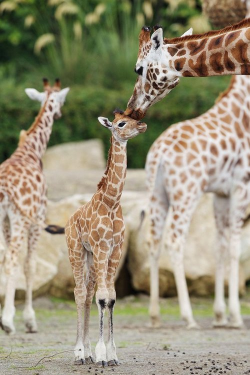 Kiss me, mommy!