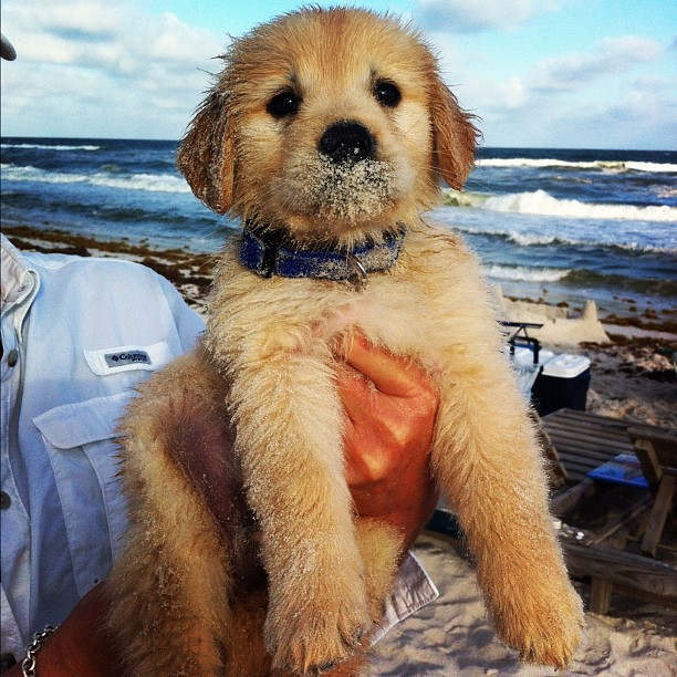 Sandy nose puppy