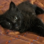 Cutest black kitten