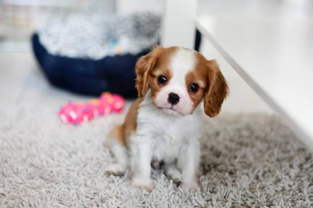 Adorable puppy