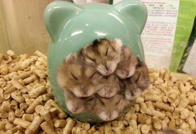 Ball of hamsters