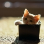 Tiny kitten in a box