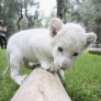 ... Teh Cute - Cute puppies, cute kittens & other adorable cute animals