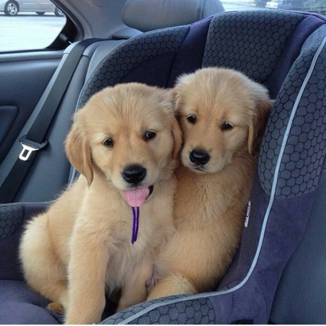Brothers on a road trip
