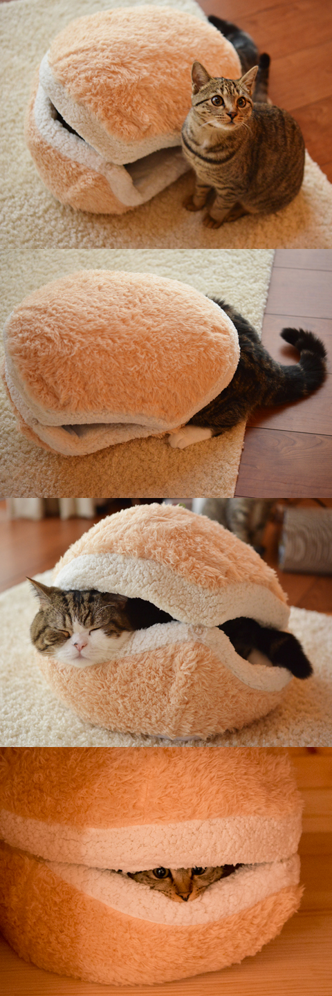 The cat burger