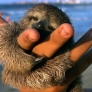 Baby sloth is content