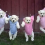 Puppies hanging in baby clothes