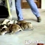 Puppies mopping