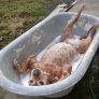 Doggy bath