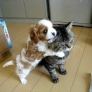 Puppy really loves cat