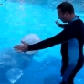 White whale gives man a hug