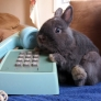 Bunny on the phone