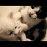 Kitten boxing match