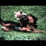 Bear cub plays with dog