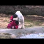 Baby polar bear vs. caretaker