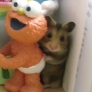 Hamster hidden behind Elmo