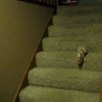 Piglet comes down the stairs