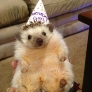 Happy Birthday Hedgehog