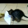 Kitten and duckling vs. sticky paper