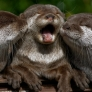 Happy baby otters